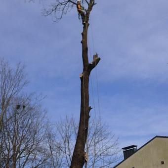 """Pavojingų medžių pjovimas, medžių pjovimas / MB """"Justin's group"""" / Darbų pavyzdys ID 373287"""