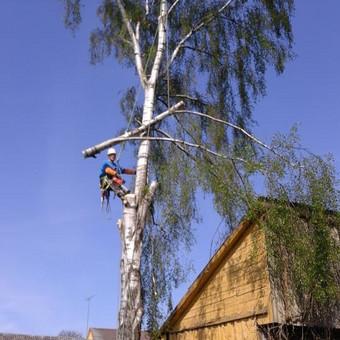 """Pavojingų medžių pjovimas, medžių pjovimas / MB """"Justin's group"""" / Darbų pavyzdys ID 373289"""