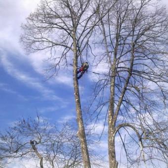 """Pavojingų medžių pjovimas, medžių pjovimas / MB """"Justin's group"""" / Darbų pavyzdys ID 373323"""
