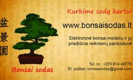 Bonsai medeliai