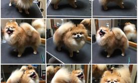 Crazy Dog, Šunų kirpykla! Naud. IV SAN BERNARD kosmetika!