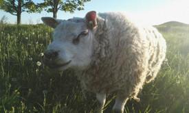Gyvūnų auginimas ir pardavimas
