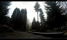 Arborizmas