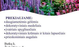 Dekoratyvinių augalų ūkis Klaipėdos raj.