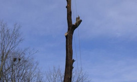 Pavojingų medžių pjovimas, medžių pjovimas