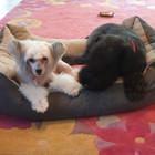 Šunų ir kačių kirpimas Žirmunuose...