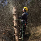 Tomas Pavojingų medžių pjovimas, medžių pjovimas