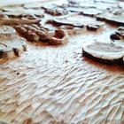Medžio Artelė Medžio artelė