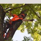 Renaldas Profesionalus arboristas