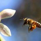 Bitininkas Bitininkyste