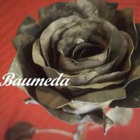 BAUMEDA